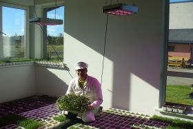 Grower R. Grajauskas about HORTILED for microgreens